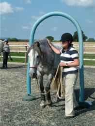 horse-ability1