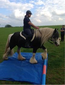 horse-ability3